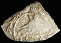 Полуполтина 1654 г.